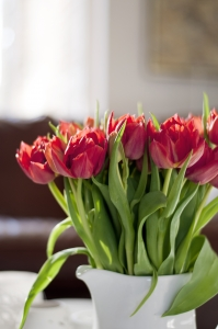 red-tulips-1388853-m