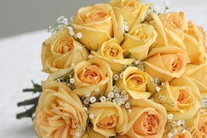 yellow-roses-2-977148-m